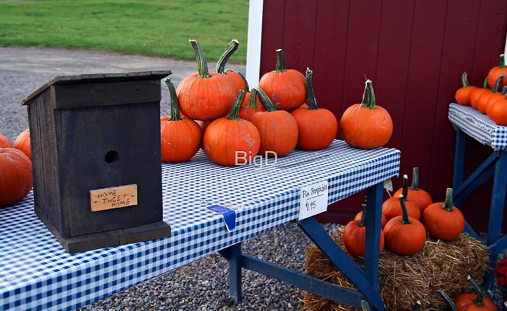 Pie Pumpkins by BigD