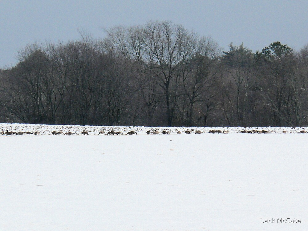 Geese on the Snow by Jack McCabe