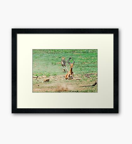 A DAY IN THE LIFE OF A CHEETA - CAPTURE SIX - CHEETAH – Acinonyx jabatus – Die Jagluiperd Framed Print