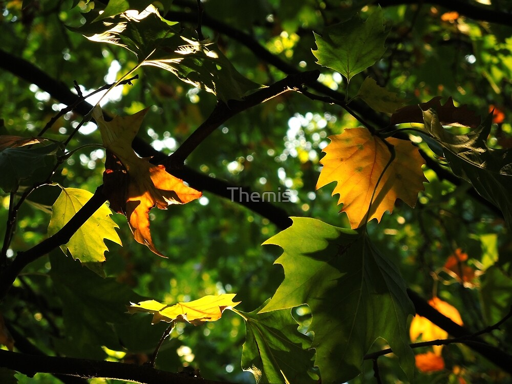The leaves are turning by Themis