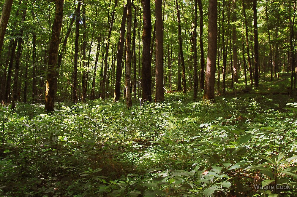 Styx Woods by Wayne Cook