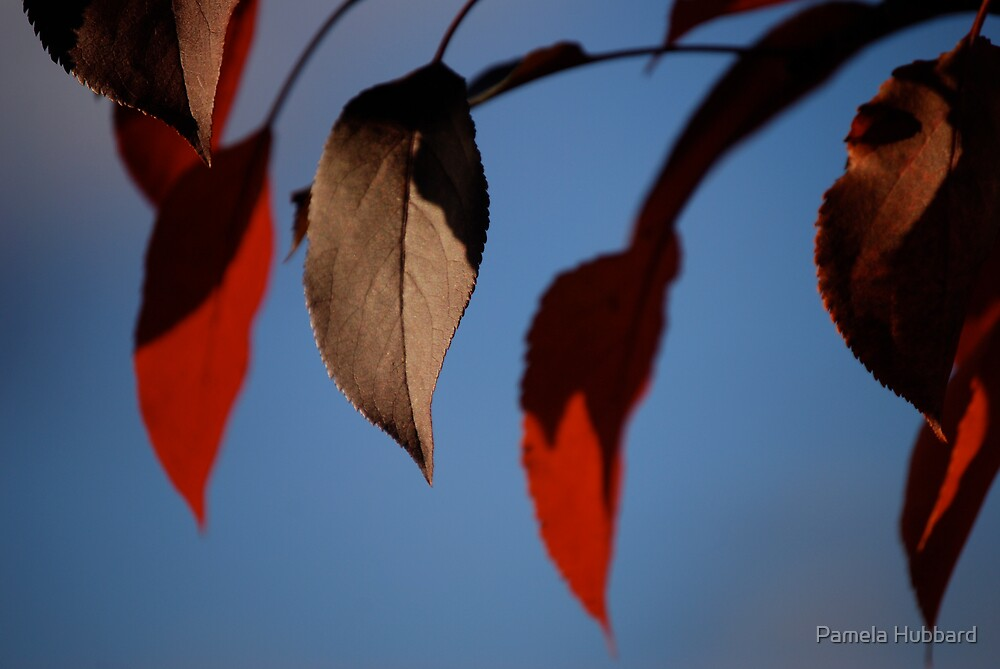Red Leaves Of Autumn  by Pamela Hubbard