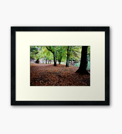 Tread Softly Framed Print