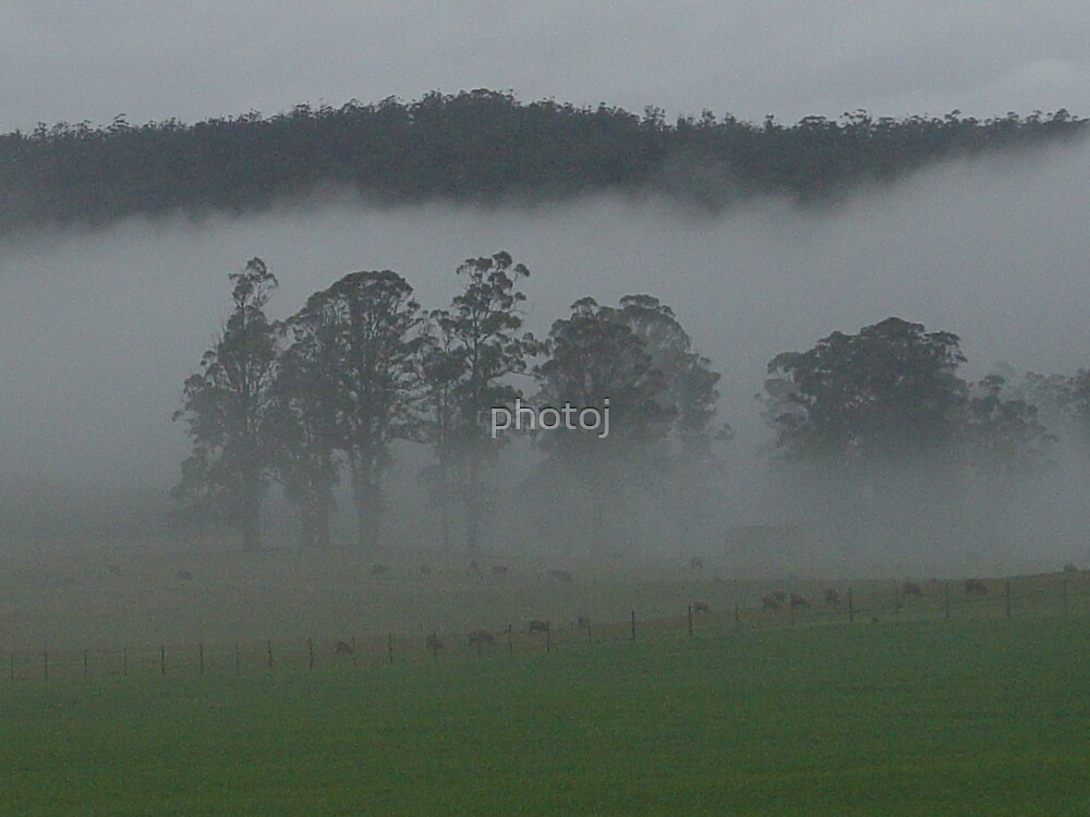 photoj Tas, Foggy Landscape by photoj