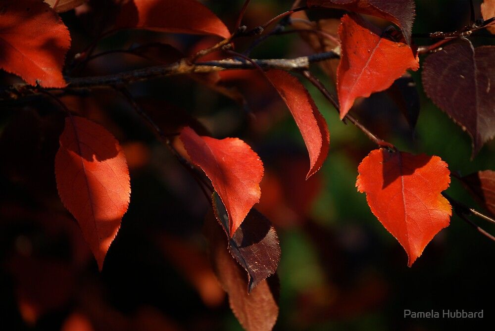 Red Leaves Of Autumn III by Pamela Hubbard