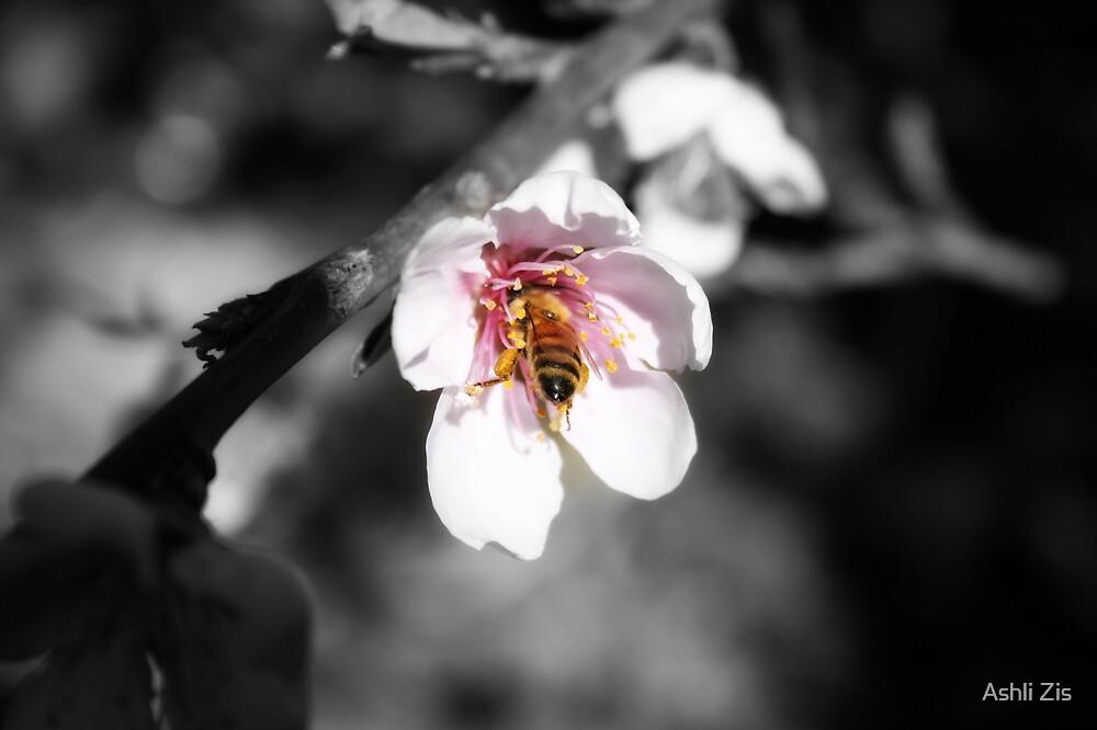 Bee by Ashli Zis