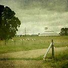 Deeargee Woolshed, Gostwyck, New South Wales, Australia by Kitsmumma