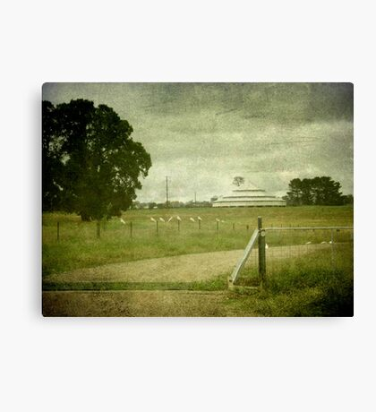 Deeargee Woolshed, Gostwyck, New South Wales, Australia Canvas Print