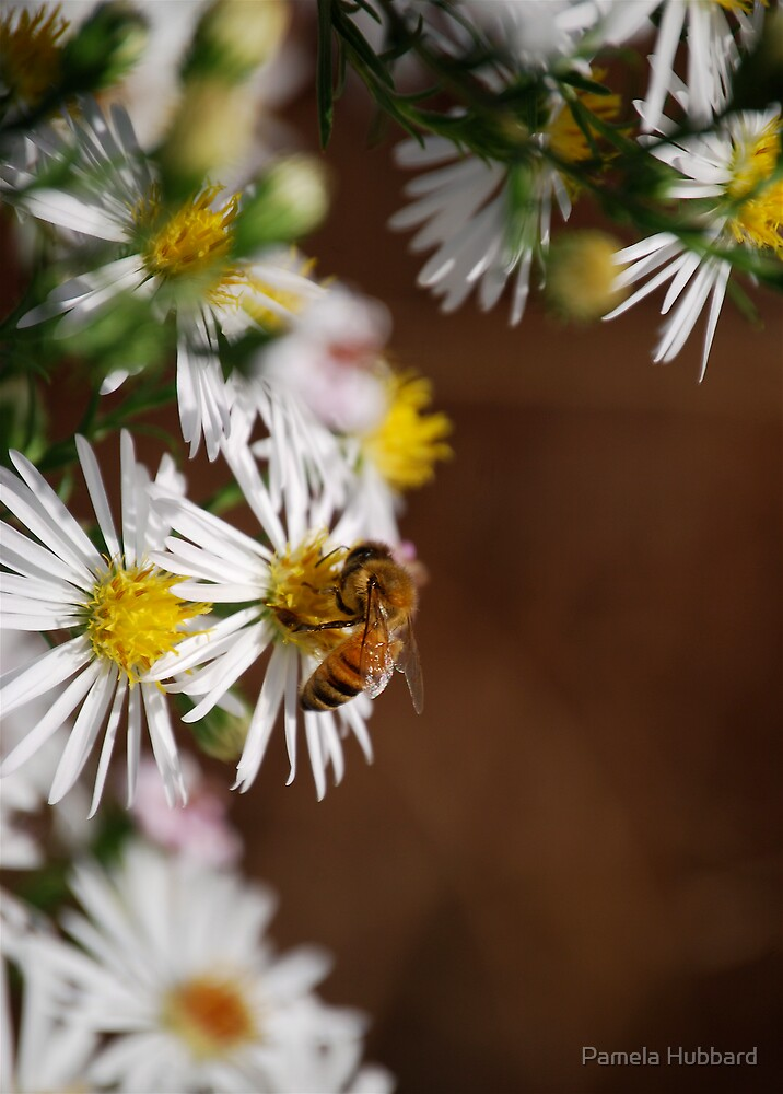 Bee And Wild Flower by Pamela Hubbard
