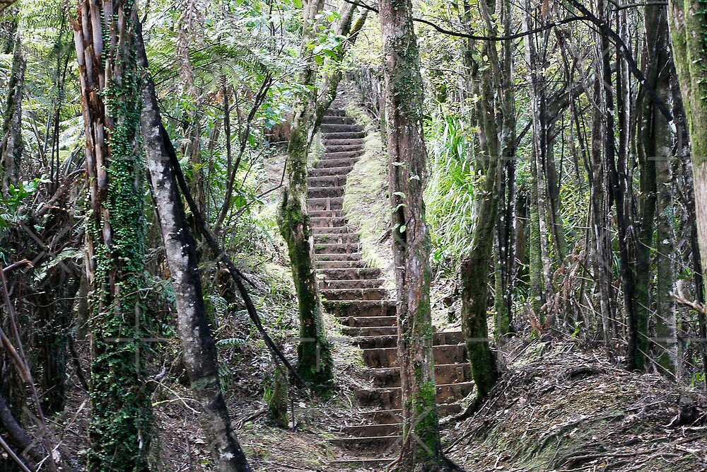 Steps in the Forrest by David Tate