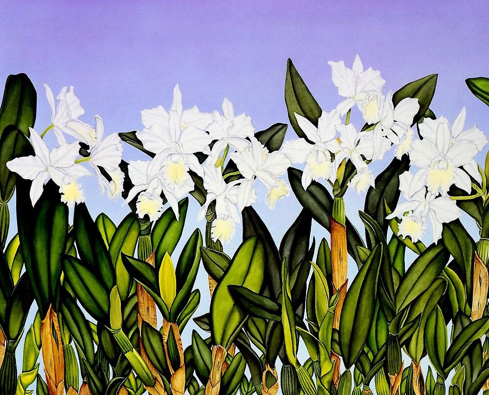 White Cattleya Orchids by joeyartist