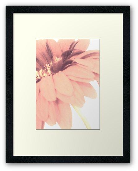 Petal Pink #2 by Lori  Rosen