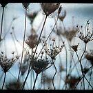 In a Dream by Kitsmumma