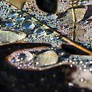 Fallen leaf by Laura Cardello