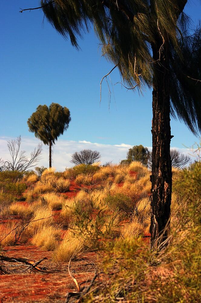 Desert Oak blowing in the wind by beautifulvalley