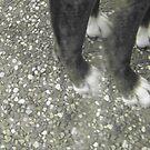 Dog Feet by Leanne Smith