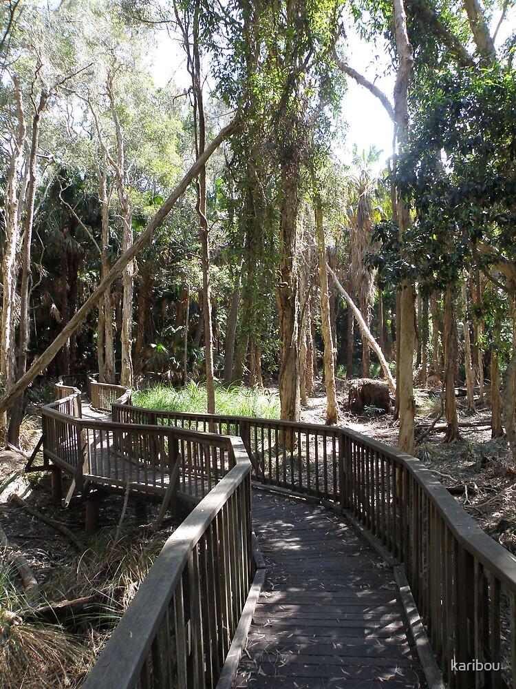 Rainforest walk by karibou