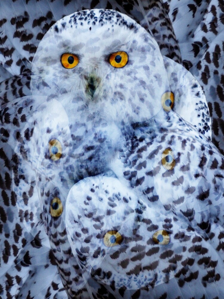 Designs Inspired By Nature: Snowy Owl by AliusImago