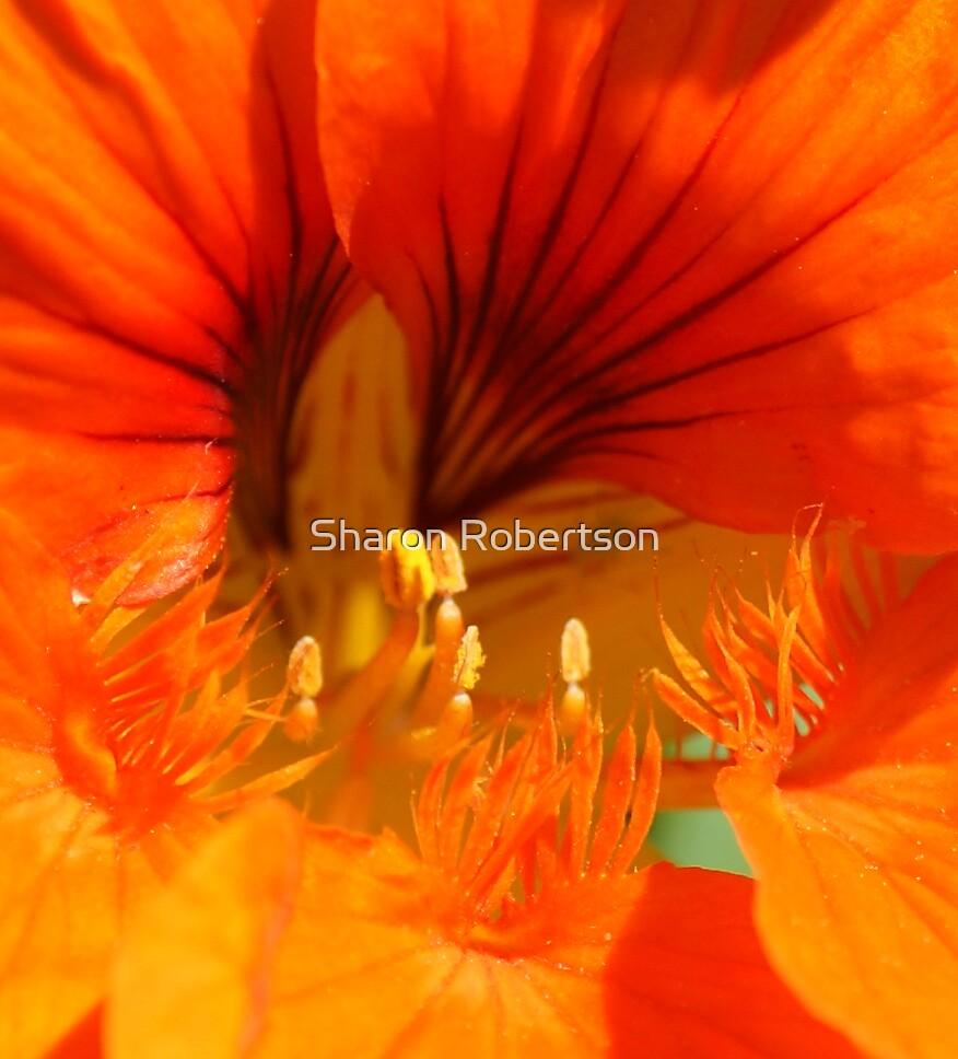 Flower Power by Sharon Robertson