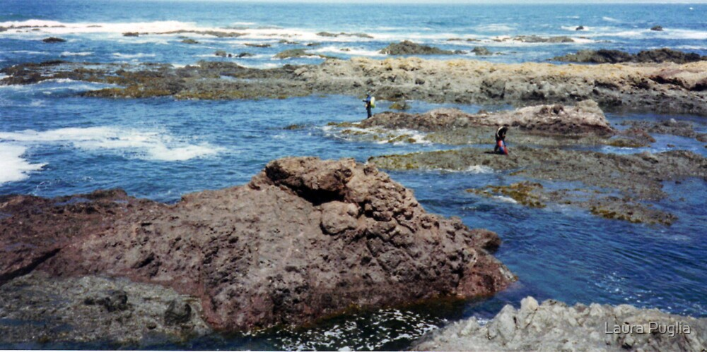 Tide Pools at Fort Bragg by Laura Puglia