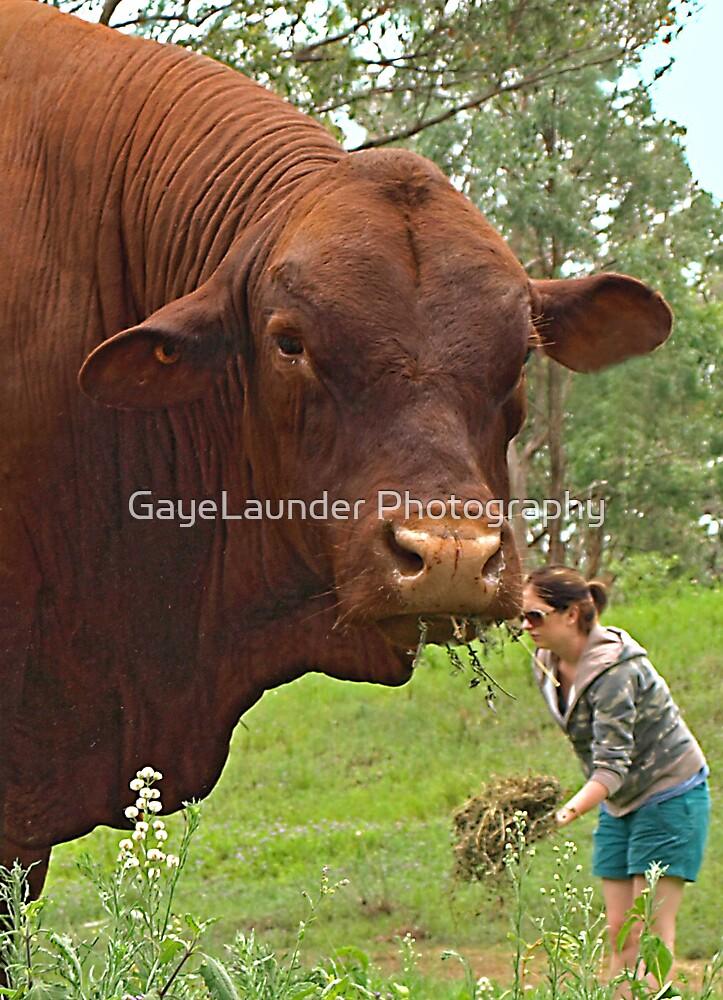 Whole Lotta Bull by GayeLaunder Photography