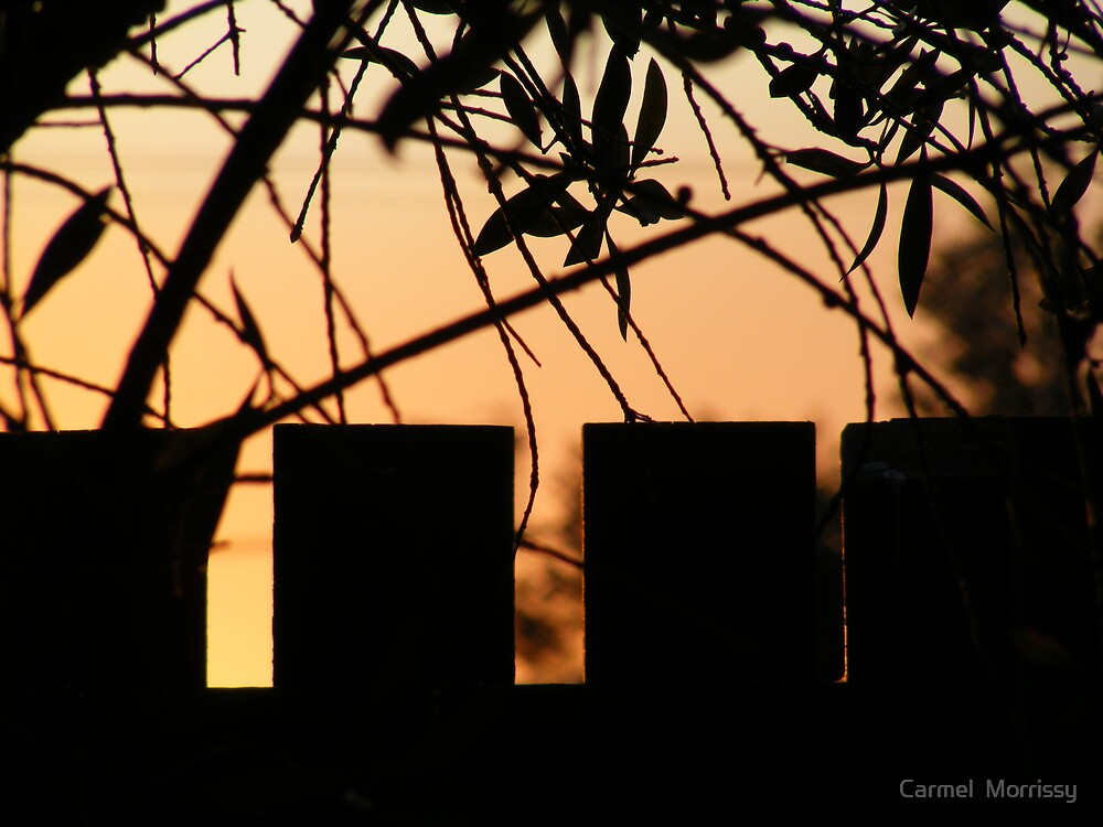 peace by Carmel  Morrissy