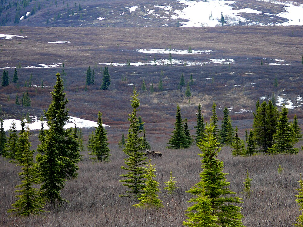 trees in the tundra by Liz Wear