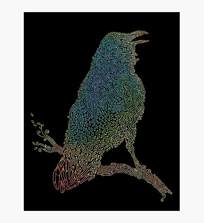 The Iridescent Raven Photographic Print