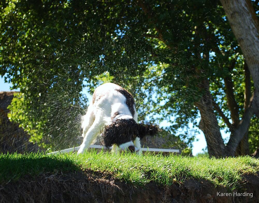 Wet Dog by Karen Harding