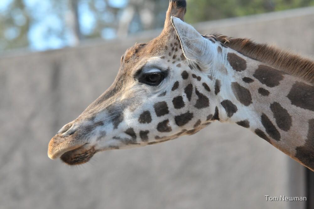 Giraffe II by Tom Newman