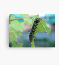 The very hungry caterpillar Canvas Print