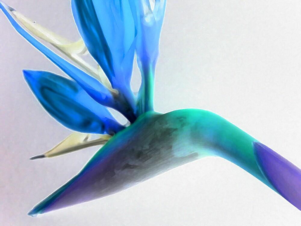 Bird of Paradise 2 by wysiwyg