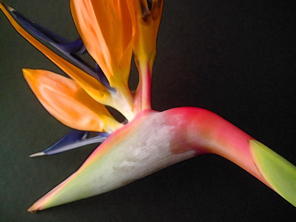 Bird of Paradise 1 by wysiwyg