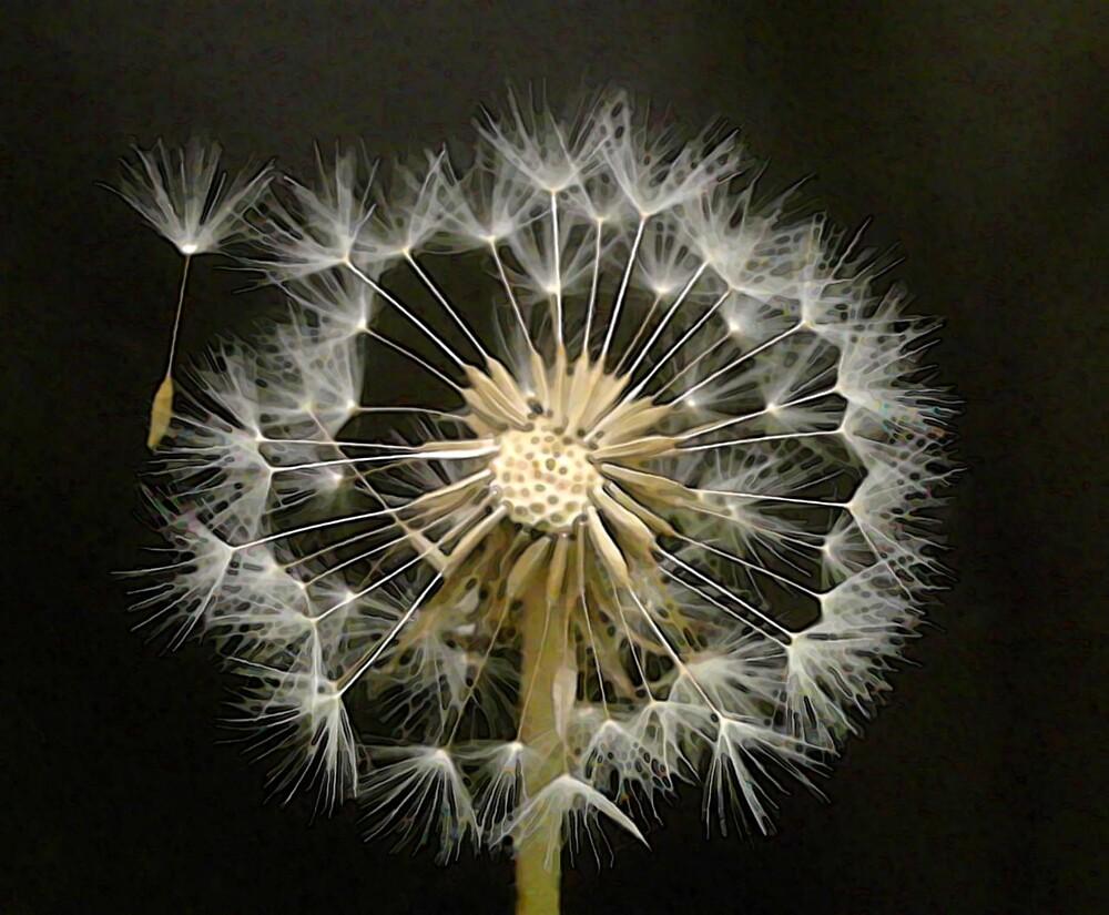 Dandelion Seed Head by wysiwyg