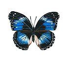 Blue Diadem Butterfly by amydaggett
