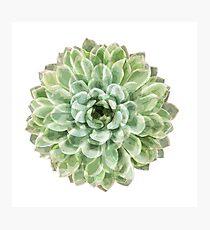 Green Succulent Photographic Print