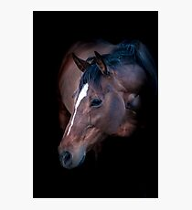 Champion Mare Photographic Print