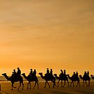 Camels on Broome Beach  by bettyb