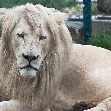 White lion  by AleFairyland