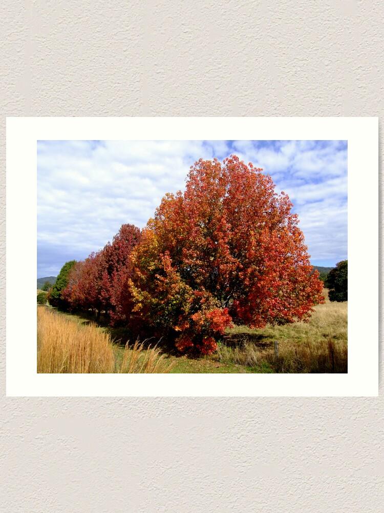Alternate view of Autumn Trees Art Print