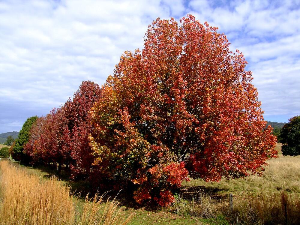 Autumn Trees by Trevor Farrell