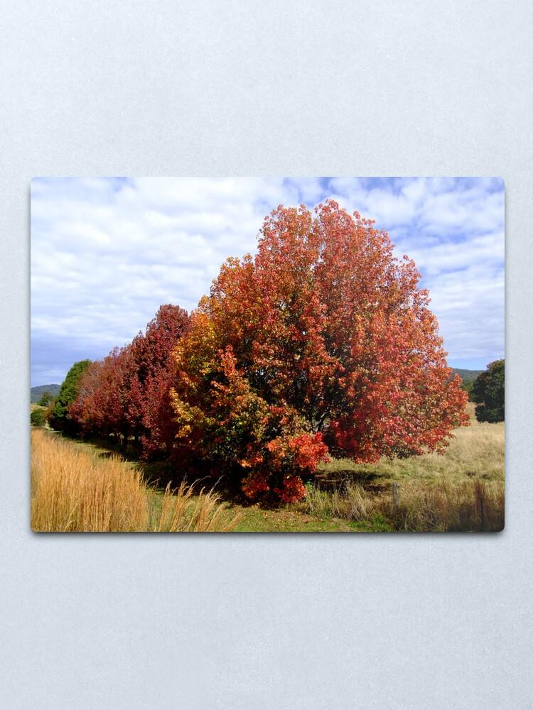 Alternate view of Autumn Trees Metal Print