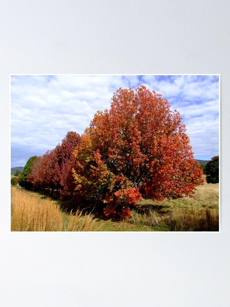 Alternate view of Autumn Trees Poster