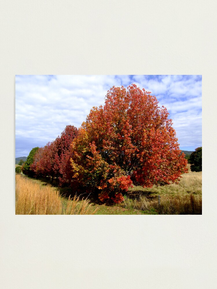 Alternate view of Autumn Trees Photographic Print