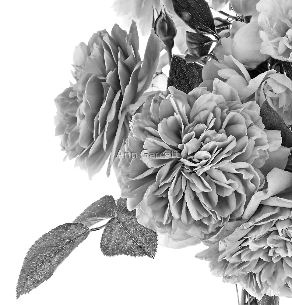 Paper Rose by Ann Garrett