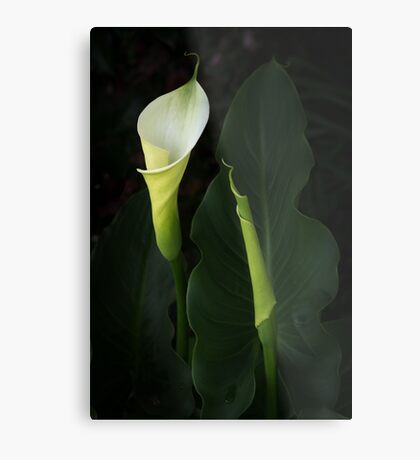 The Goddess Lily Metal Print