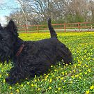 Springtime at the Dog Park by Beth A.  Richardson