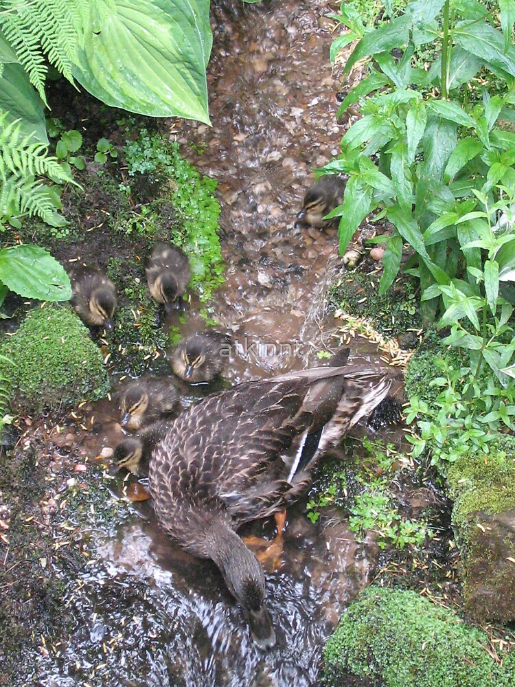 Mother Mallard and Ducklings by atkinnt