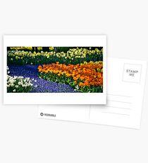 Keukenhof Gardens Postcards