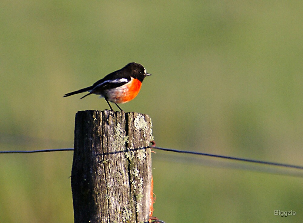 Scarlet Robin by Biggzie